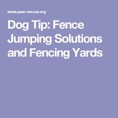 Dog Tip: Fence Jumping Solutions and Fencing Yards