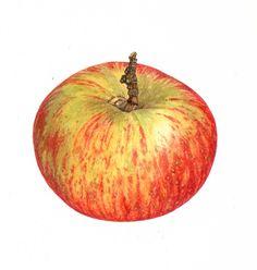 Lord Lambcourne Apple, Kate Wilson