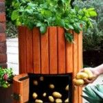 How To Grow 100 Pounds Of Potatoes In 4 Steps