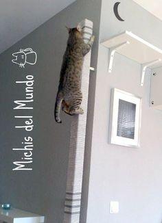 Cat climbing post