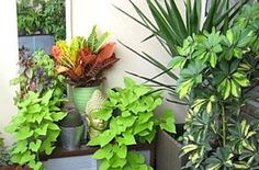 12 easy plants for your terrace garden Plants for the balcony garden come in almost every color and shape imaginable. Many plants do well in small containers and bring splashes of color to balcony container gardens. Apartment Balcony Garden, Small Balcony Garden, Terrace Garden, Balcony Gardening, Balcony Ideas, Urban Gardening, Apartment Gardening, Organic Gardening, Container Gardening