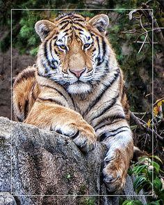 eye contact,Columbus Zoo,photo by Thomas Alexander