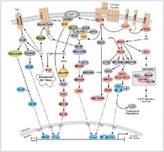 CST - T-Cell Receptor Signalling Pathway