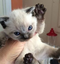 Put Me Down Or I'll Claw Your Eyes Out With My Tiny Paws