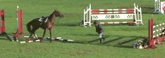 Horse Has done that so meany times dose not need the rider!!!!! Por horse