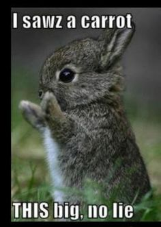 Lol. Again- maybe not a house pet, but a baby bunny is an animal :)omg Soooooooo CUTE