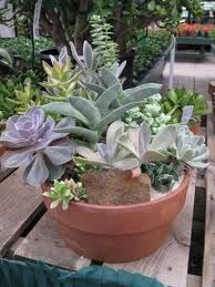 cacti and succulents - Google Search