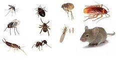8 remedios simples que hacen que su hogar esté libre de insectos (sin productos…