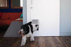 No apartamento do Dr. Pet, os cães Estopinha e Barthô (foto) podem circular por todos os ambientes, inclusive os do segundo andar. Nesse pavimento, as portas precisam permanecer fechadas por conta do ar-condicionado. Por isso, para que os cães tenham livre acesso, a peça corrediça recebeu uma abertura exclusiva para entrada dos pets