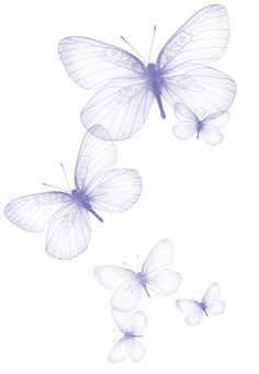 Transparent Butterfly PNG Clipart Picture