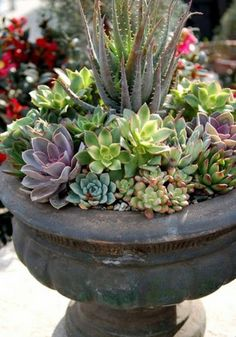 50 ways of creating an enchanted succulent garden in your backyard, Garten ideen