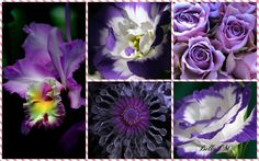 Cabbage, Art Photography, Purple, Flowers, Plants, Type 1, Collages, Theater, Facebook