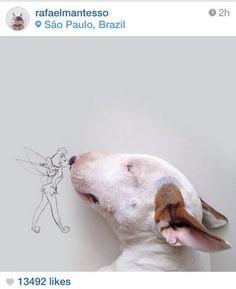 Dog fairy.