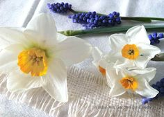 spring daffodils and hyacinths, two favorites of mine!