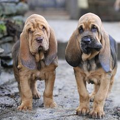 OMG! They're Precious!!!