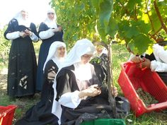 The Lord loves with a tender love those who find their happiness in a total abandonment to His paternal care.- St. Francis de Sales  Photo - Sisters adorers harvesting in the vineyard