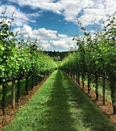 Virginia Winery, Barboursville, VA