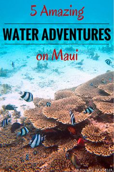 5 Amazing Water Adventures on Maui