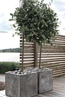 Grafitgrå: Tacksamma Salix