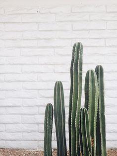 green thumb | peruvian cactus