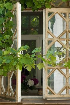 green - grape vines - window