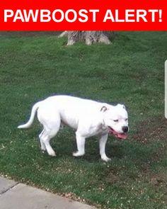 Please spread the word! Jango was last seen in Amarillo, TX 79109.    Nearest Address: Near W 28th Ave & Crockett St