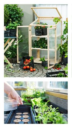 Katso helpot ideat ja uutuustuotteet itseviljelyyn. Kasvihuone parvekkeelle on vain yksi keino aloittaa viljely nopeasti. Terrarium, Backyard, Outdoors, Nails, Garden, Home Decor, Terrariums, Finger Nails, Patio