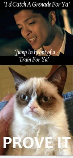 Top 49 Most Funniest Grumpy Cat Quotes