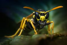 wasp by BO LED on 500px