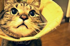 kitty in a cone.