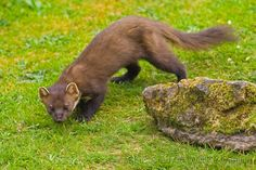Scottish Flora and Fauna