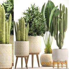 House Plants Decor, Plant Decor, Potted Plants, Indoor Plants, R Cafe, 3d Warehouse, Free Plants, Interior Decorating, Interior Design