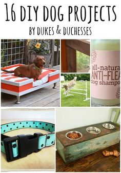 I love dogs.  To me, there's nothing better than a happy dog greeting you at the door when you arrive home.  And if you feel like your dog is a member of the family {who doesn't?} then it just makes sense that the dog should have some super-cool DIY goodies to enjoy.  These 16 DIY dog … #dogdiyprojects