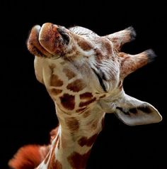 I Can't Believe This Giraffe Photo Is Real. Beautiful!