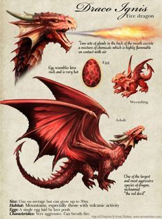 Fire dragon description by Anne Stokes Dragon Egg, Fire Dragon, Baby Dragon, Magical Creatures, Fantasy Creatures, Fantasy Dragon, Fantasy Art, Fantasy Wesen, Dragon Anatomy