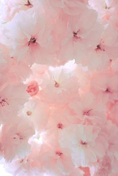 SOFT LIGHT PINK FLOWERS