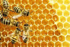 Wissenswertes über Honig, Bienen und Imker