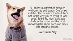 Menswear Dog Fashion Tip
