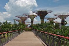 Singapore's Solar-Powered Supertrees