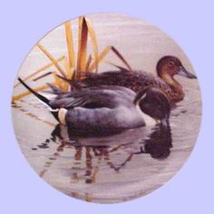 American Waterbirds: Pintails - Hamilton Collection - Artist: Rod Lawrence