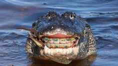 14 Animals With Braces That Will Make You Smile 14 animaux avec des appareils qui vous feront sourire Your Smile, Make You Smile, Orthodontic Humor, Teeth Whitening Procedure, Braces Colors, Local Dentist, Teeth Braces, Dental Braces, Brace Face