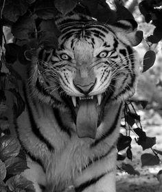 Amazing Animal Pictures (120 pics) I love animals