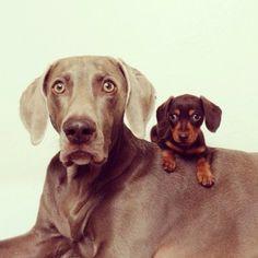 Te lief: Deze twee honden zijn vrienden voor het leven | NSMBL.nl