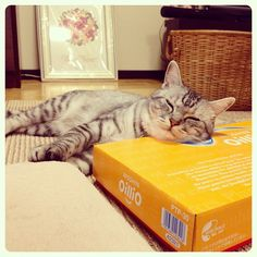 #cat #cats #猫 #ねこ部 #ねこ #ネコ #webstagram