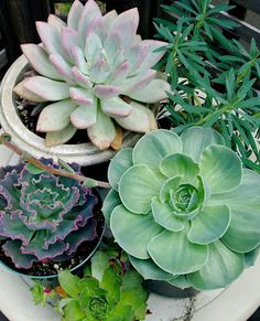 Succulents & Cabbage for flower decor