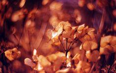 Beautiful, Swirly Nature Shots Courtesy of the Petzval Lens - Lomography