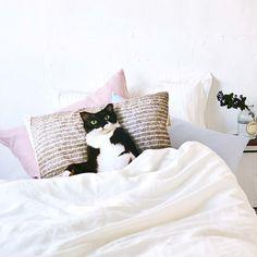 今夜も「添い寝待ち」|添い寝待ち猫 ギズモさんまくらカバーの会