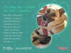 Dia 4 de abril, Dia Mundial dos Animais de Rua! Os cães são o nosso elo com o paraíso. Eles não conhecem a maldade, a inveja ou o descontentamento. Sentar-se com um cão ao pé de uma colina numa linda tarde, é voltar ao Éden onde ficar sem fazer nada não era tédio, era paz.     Conheça mais sobre o trabalho do Projeto Vida Animal.  Acesse: www.projetovidanimal.com.br    #adotenaocompre #adote #caes #dogs