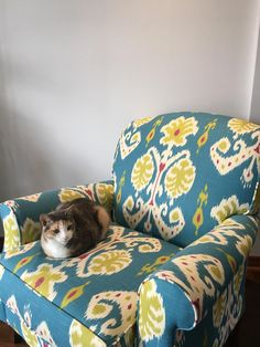 Cat loaf on my funky turquoise chair