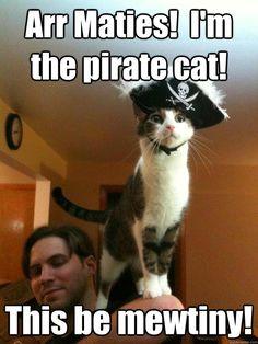 Pirate cat ye say?!